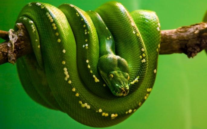 Змеи (56 обоев)