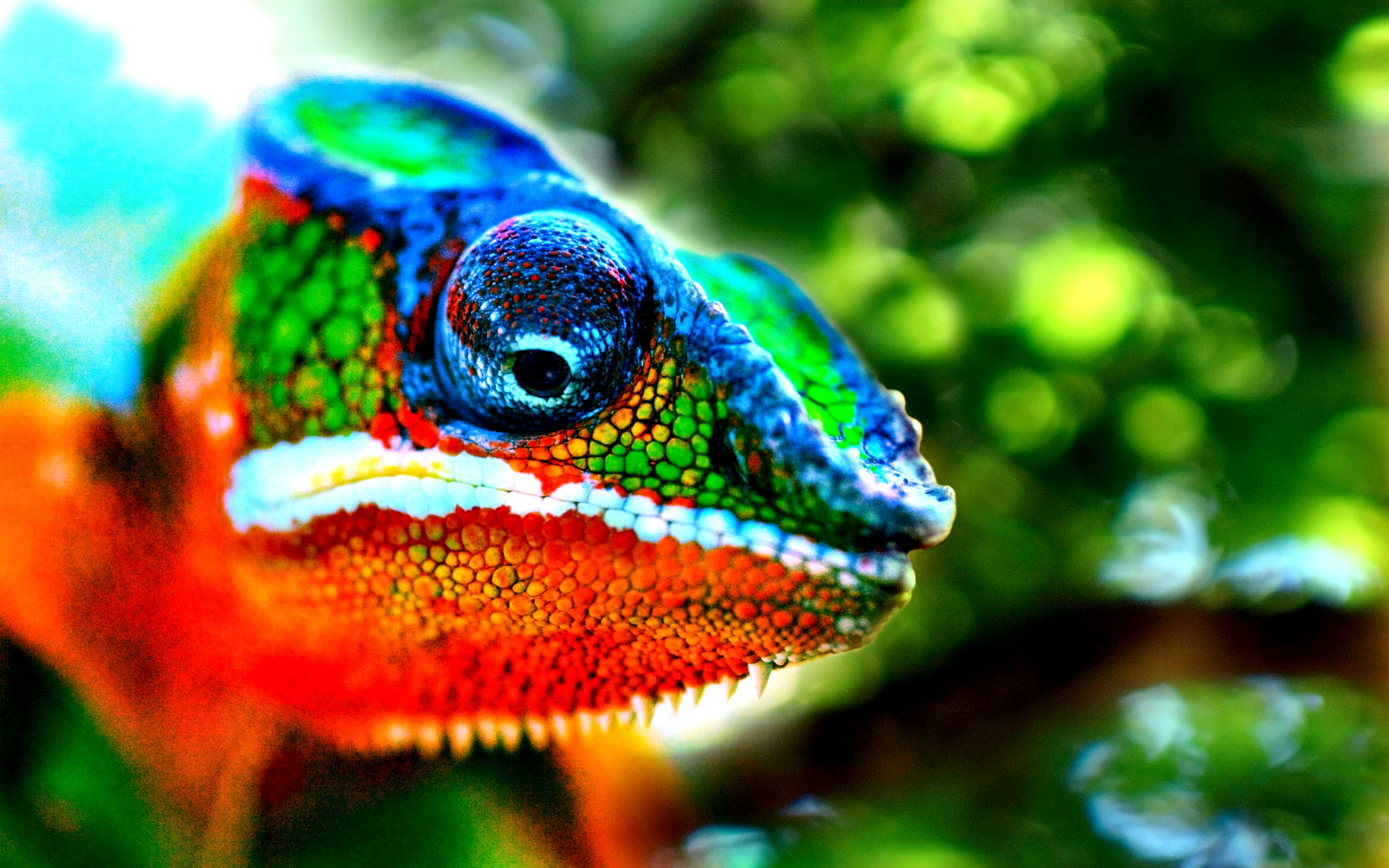 Colorful animal wallpaper