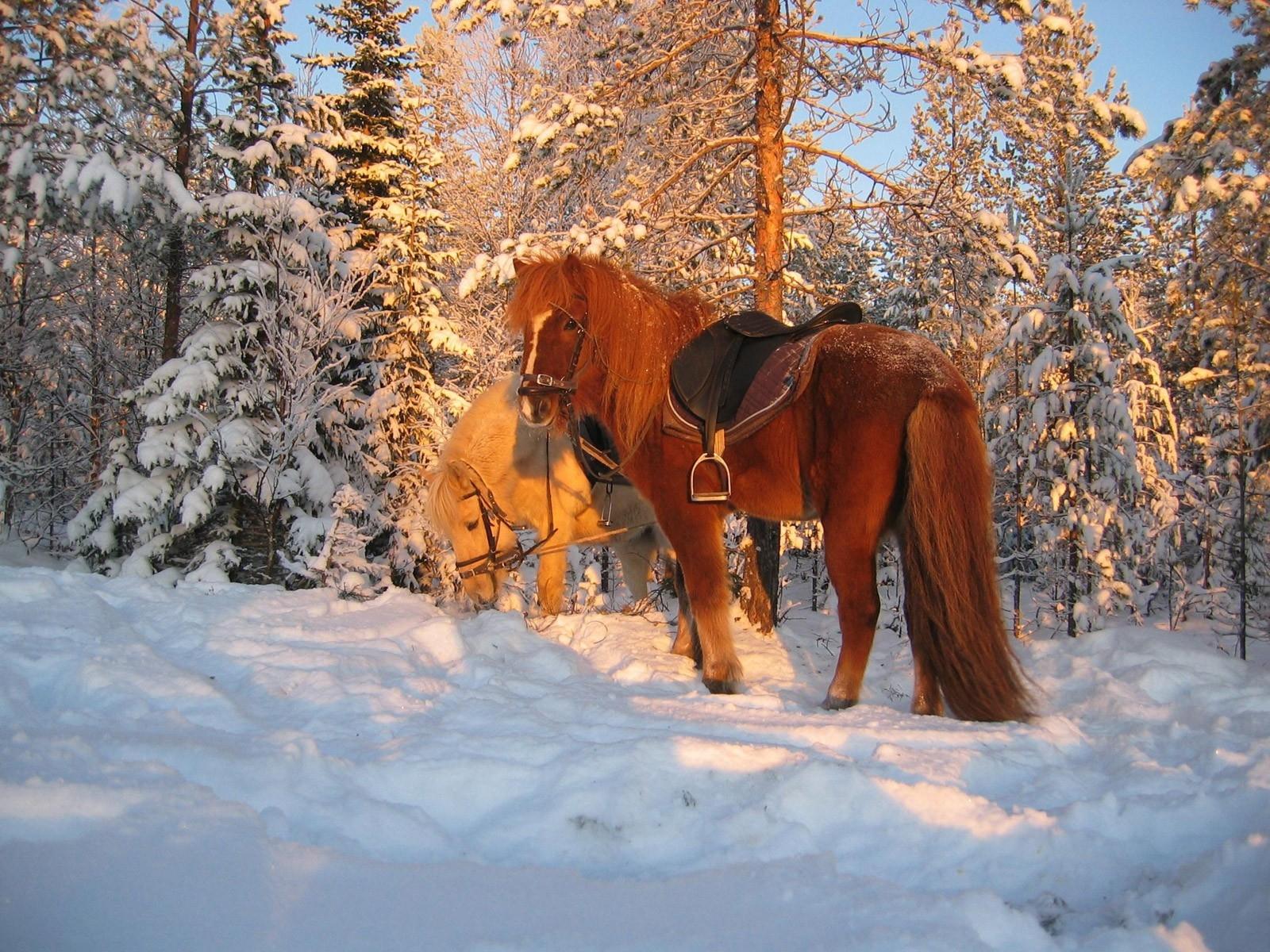 обои для рабочего стола зимние лошади № 465211 без смс