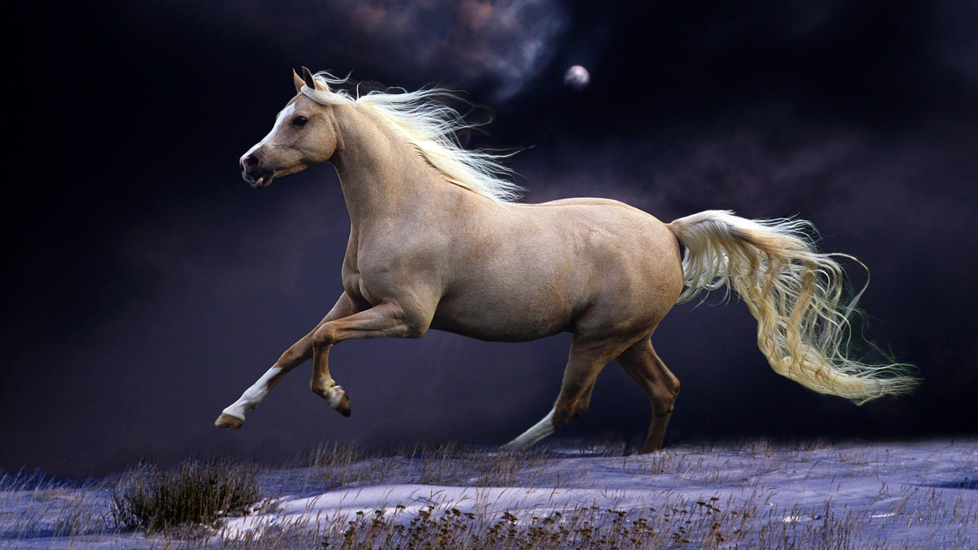 год лошади обои для рабочего стола № 528484 без смс