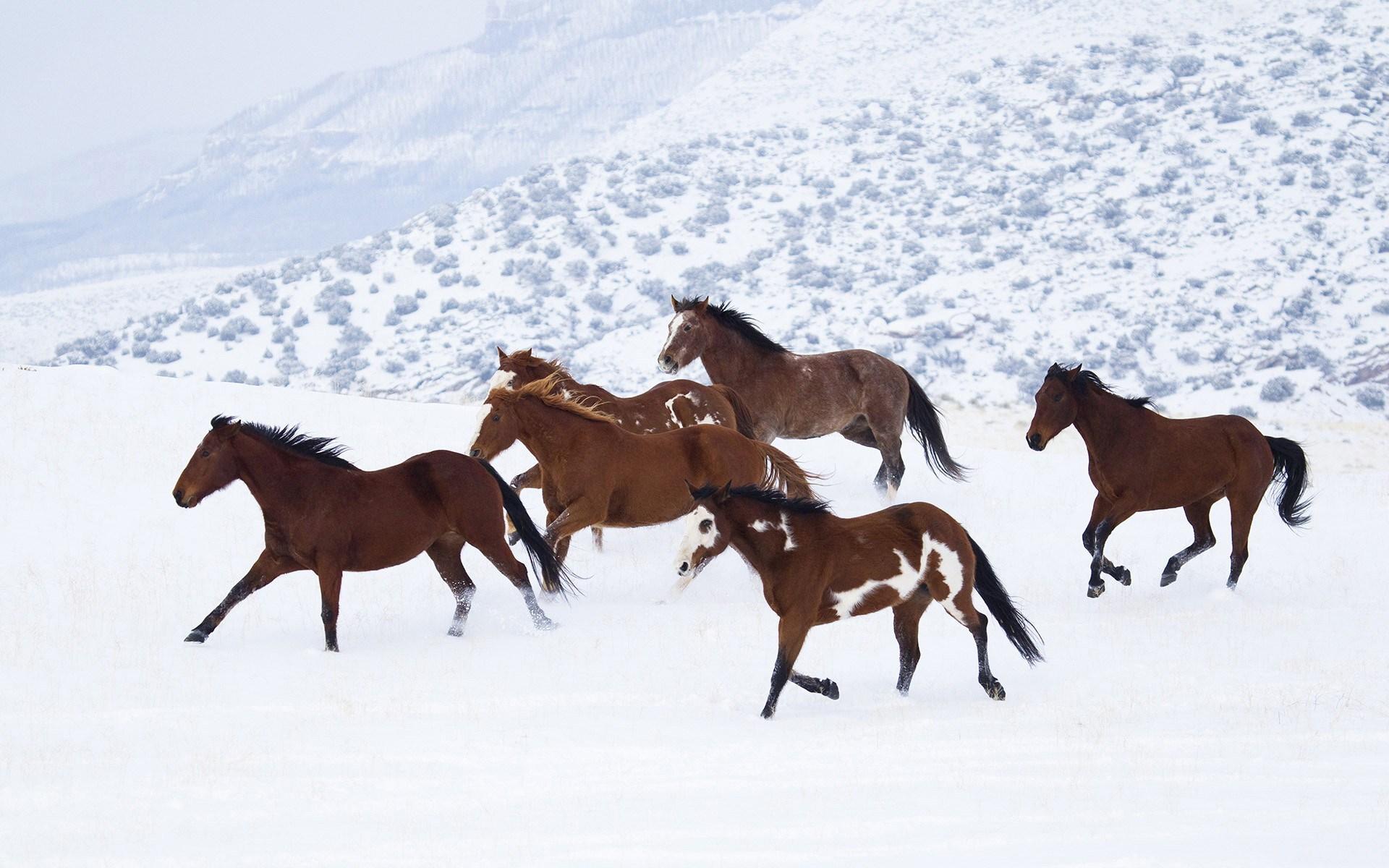 обои для рабочего стола зимние лошади № 465243 загрузить