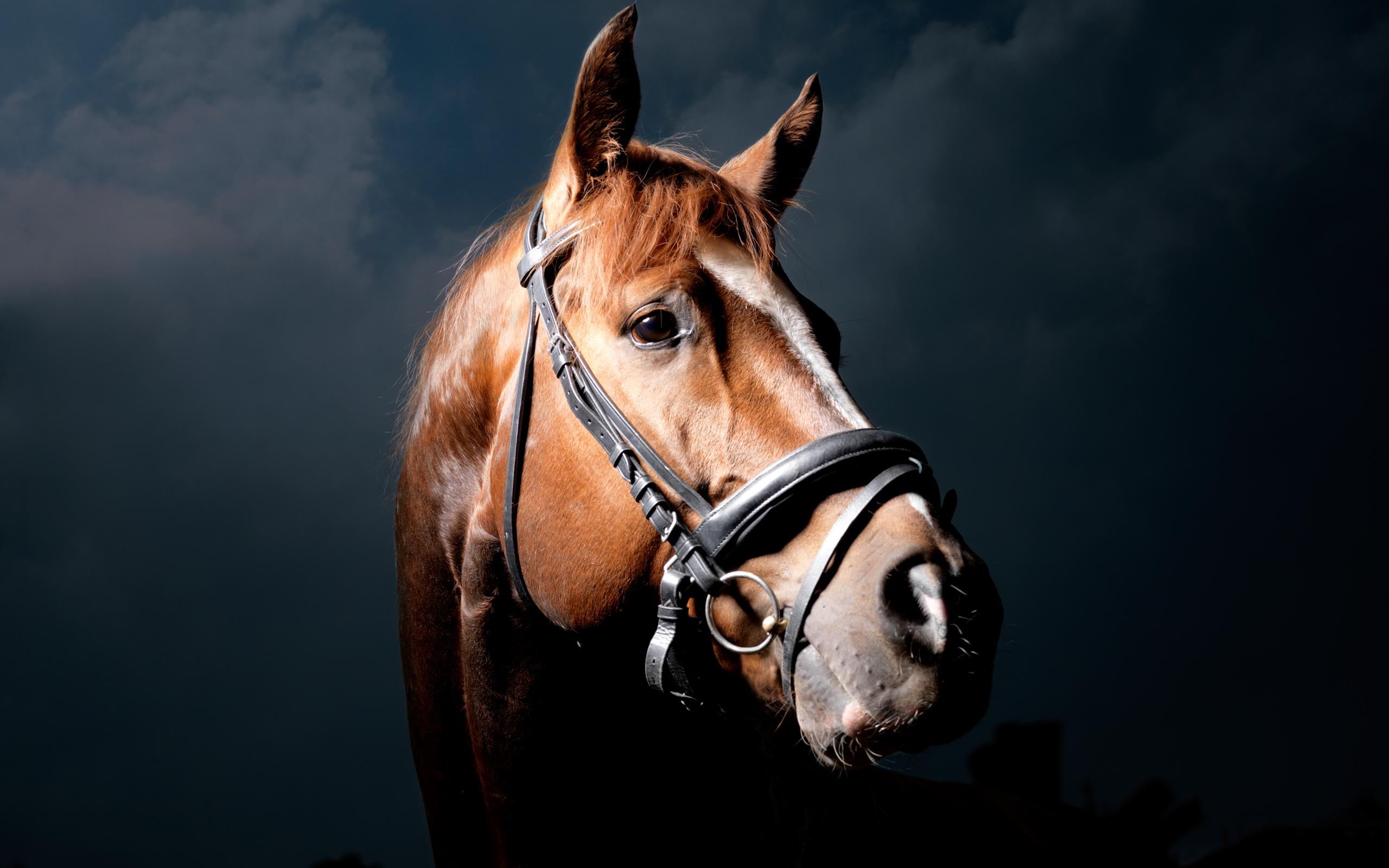 качественные обои на рабочий стол лошади № 503701 бесплатно