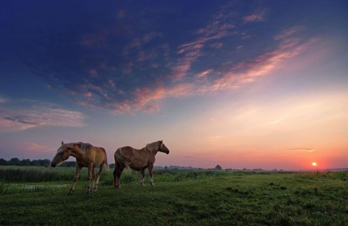 Лошади коричневые 2 (95 обоев)