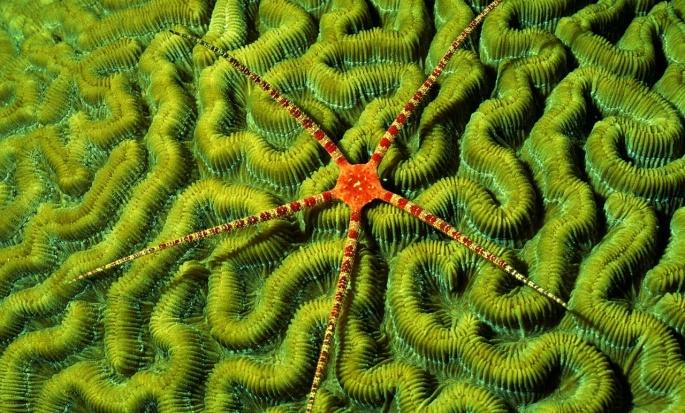 Морские звезды (81 обоев)