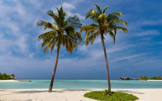 Тропики, Экзотика и Пальмы (55 обоев)