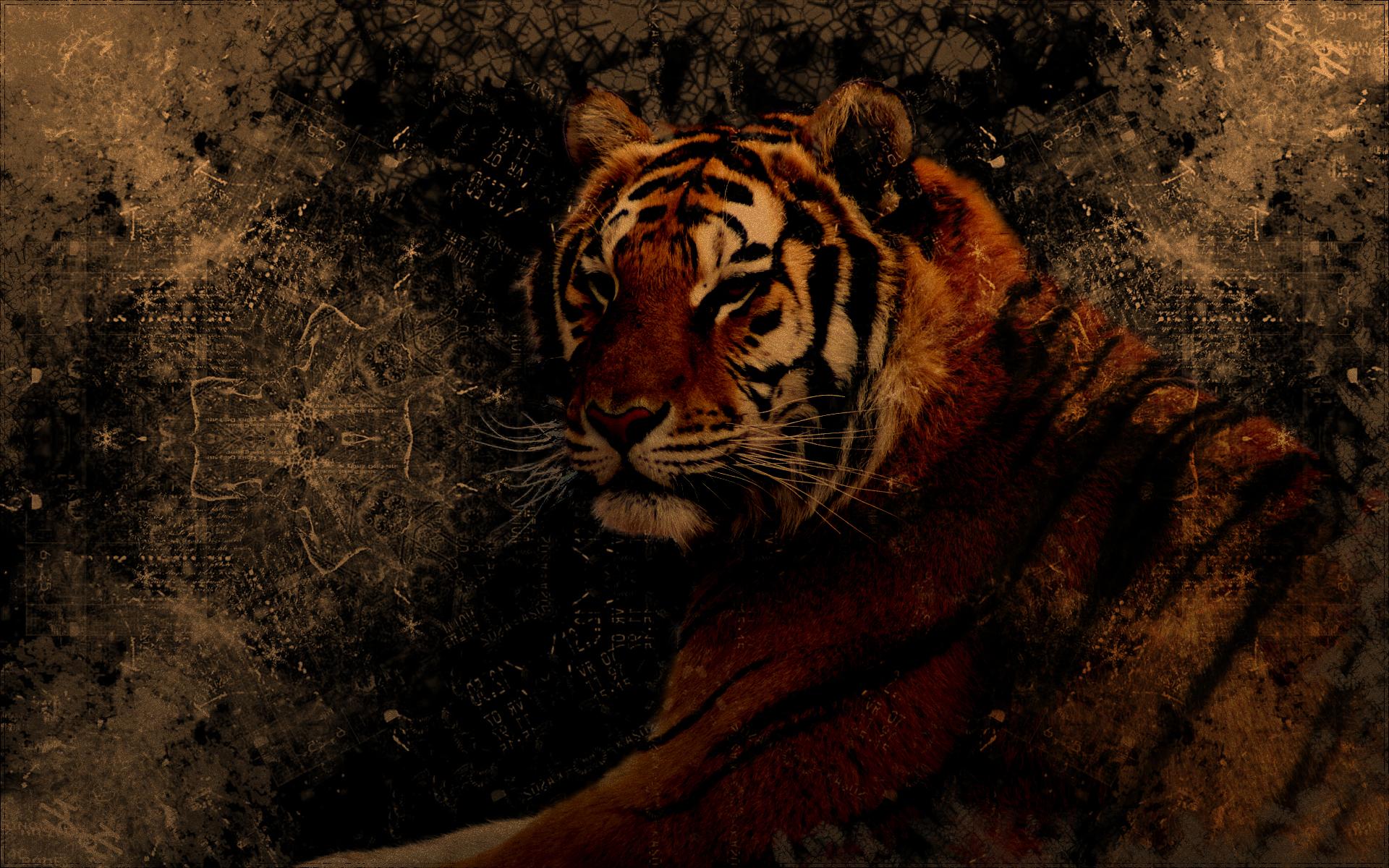 Tiger tumblr wallpaper