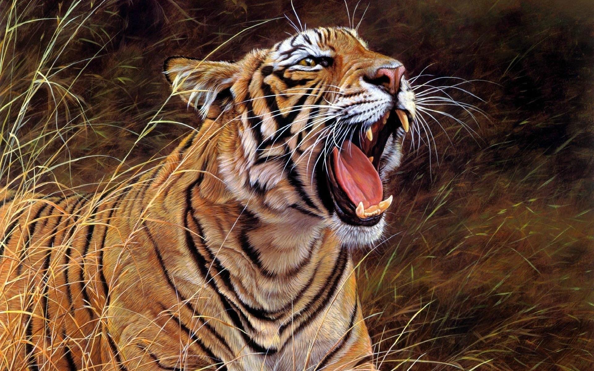 Growling white tiger wallpaper