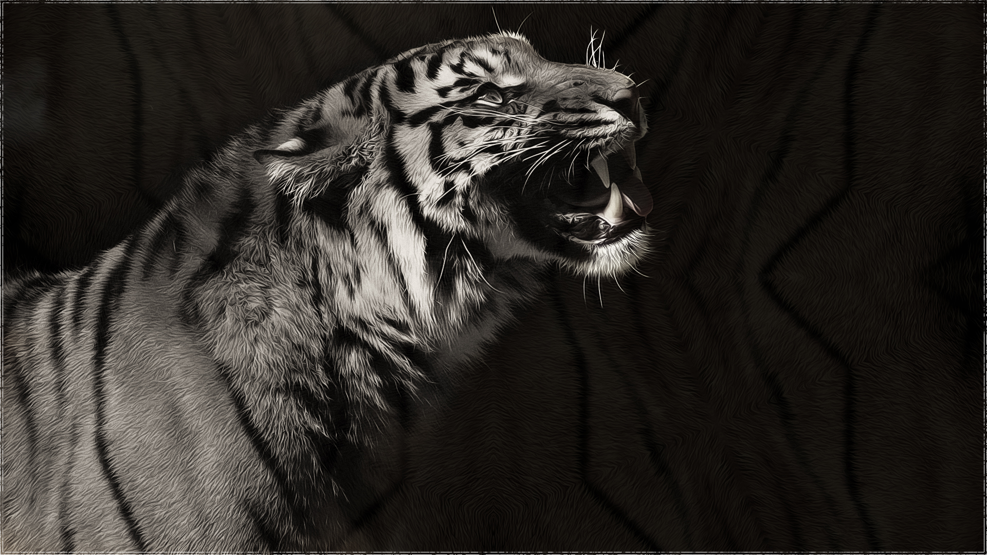 tiger wallpaper black and white - crazywidow