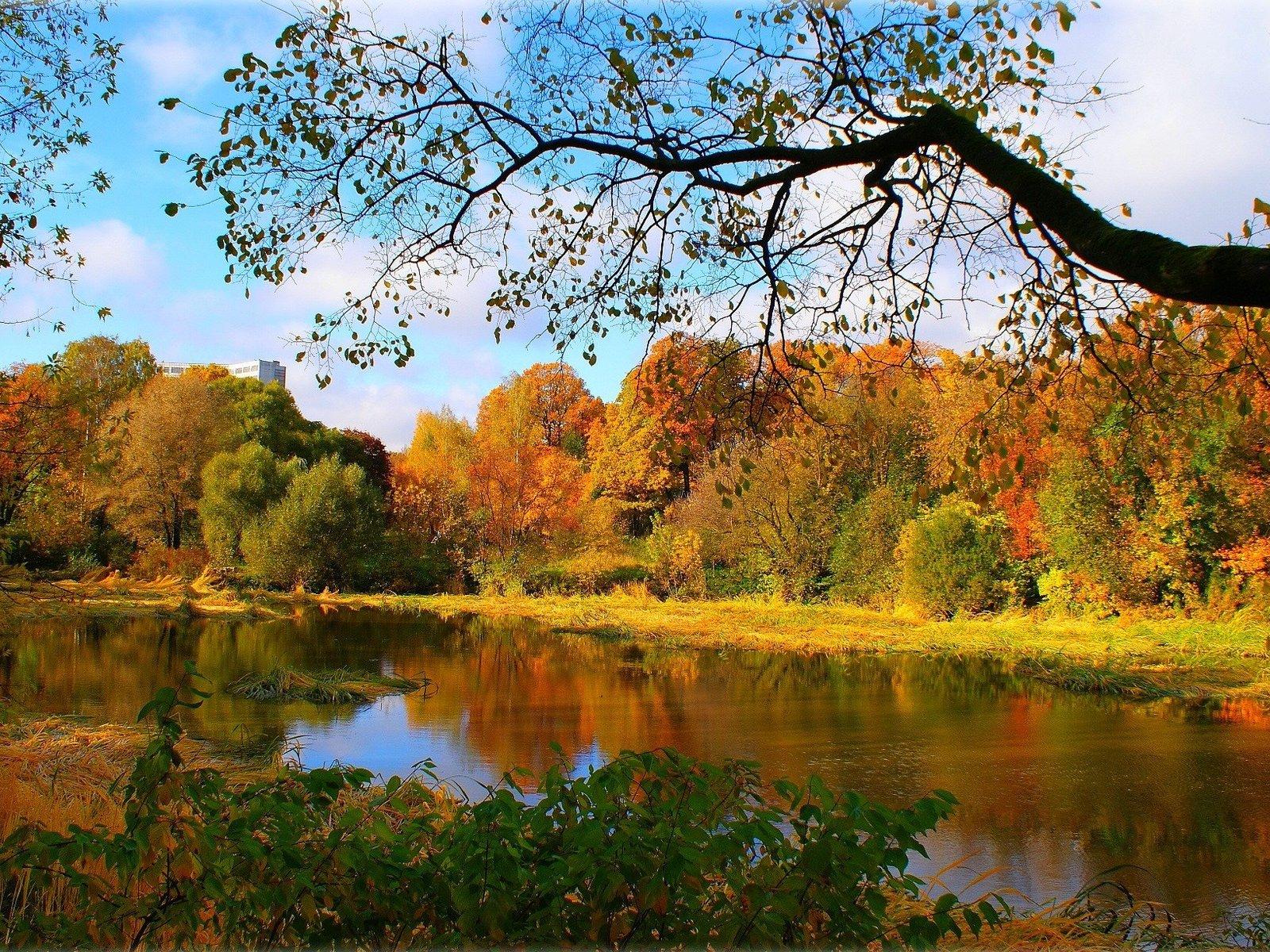 Обои осень. Природа foto 7