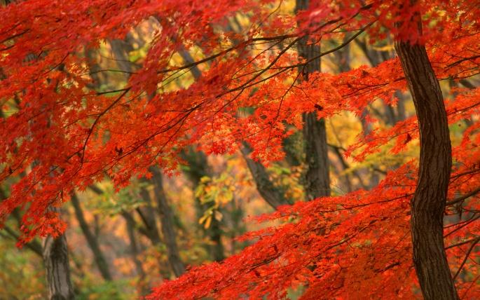 Золотая осень (229 обоев)