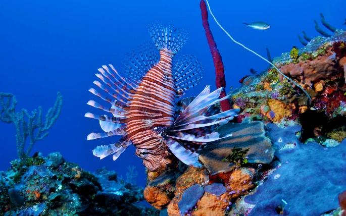 Рыбы (69 обоев)
