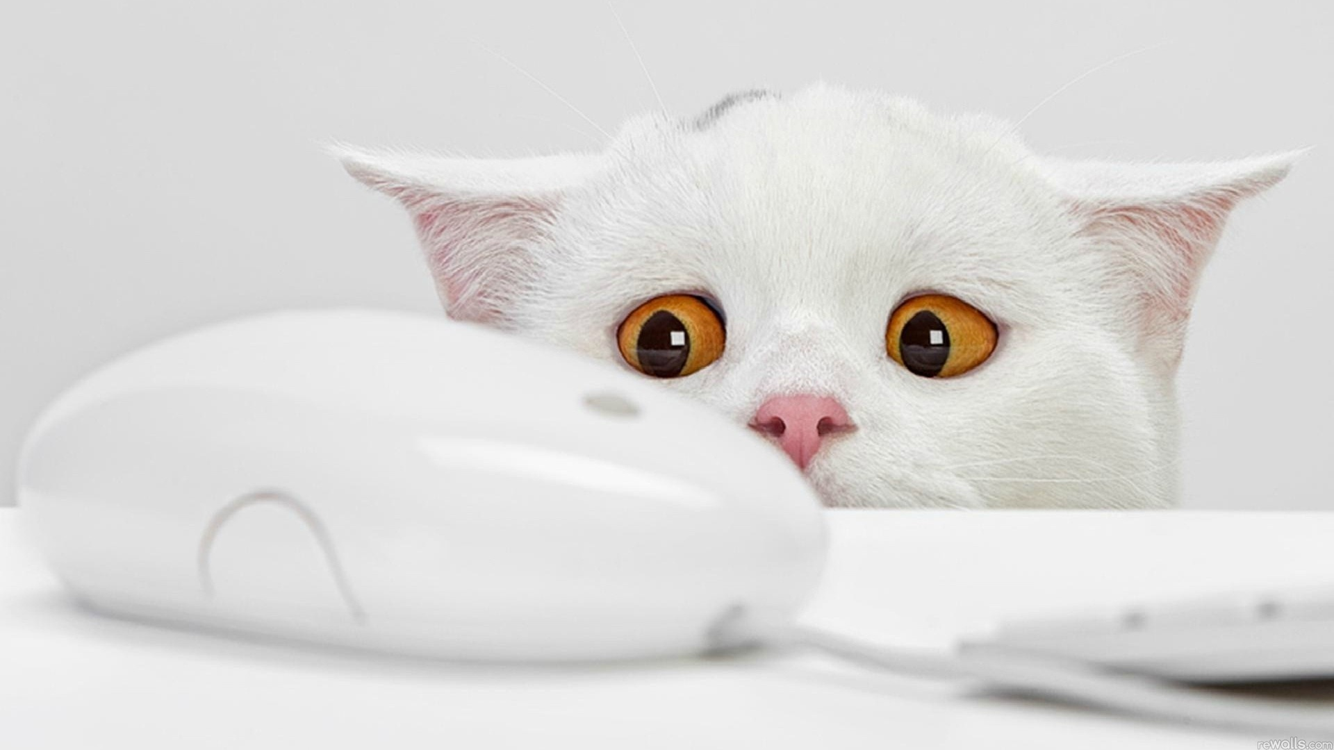 Funny cat wallpaper desktop