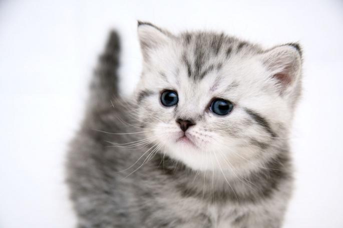 Коты (100 обоев)