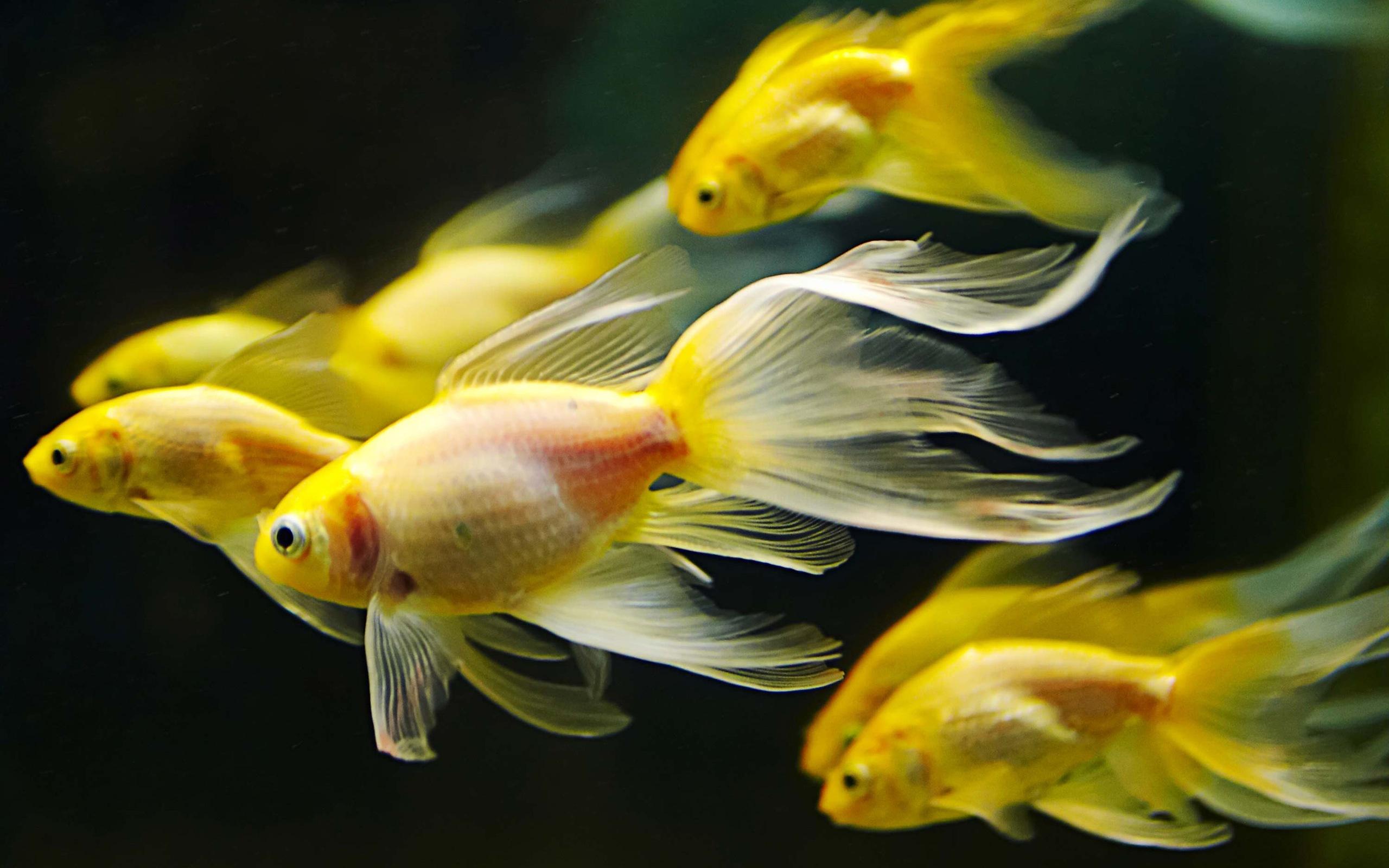 Обои животные рыбы рыба картинки на рабочий стол