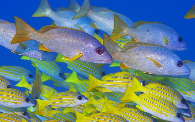 Рыбы 3 (75 обоев)