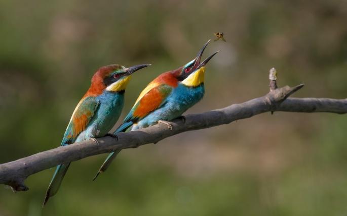 Птицы разные 2 (71 обоев)