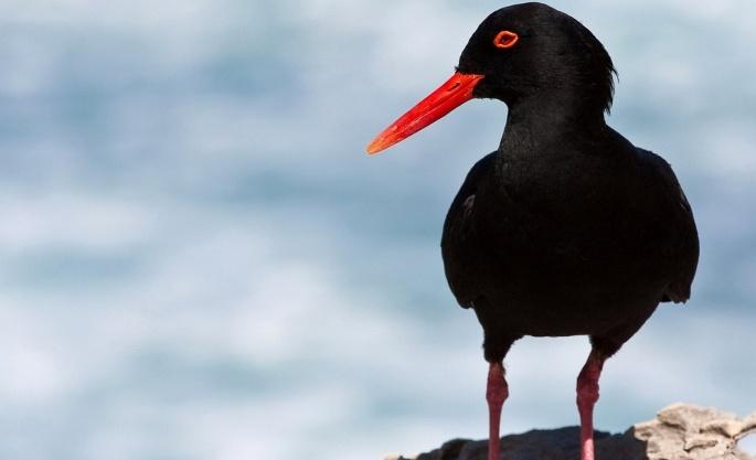 Птицы разные (61 обоев)