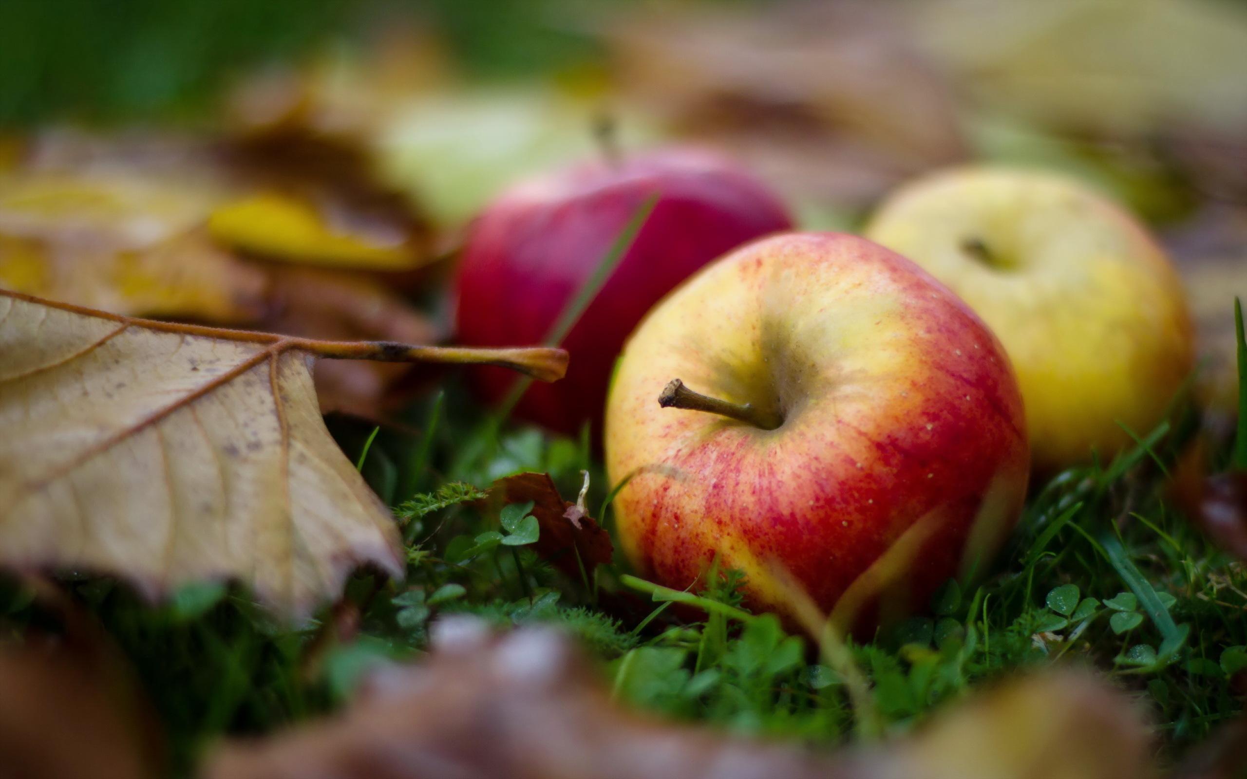 фото осень в хорошем качестве