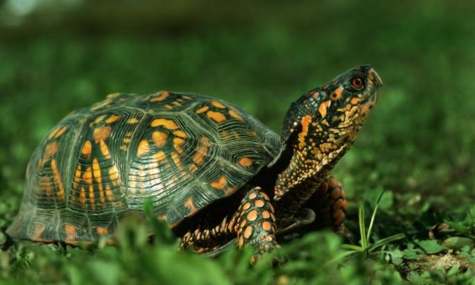 Рептилии (71 обоев)