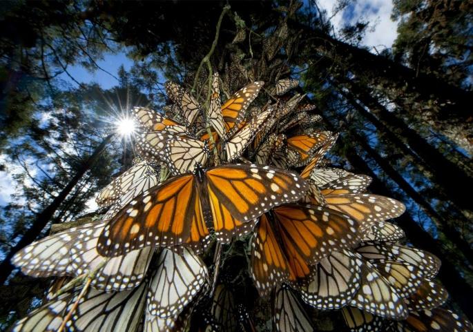 Бабочки 3 (105 обоев)