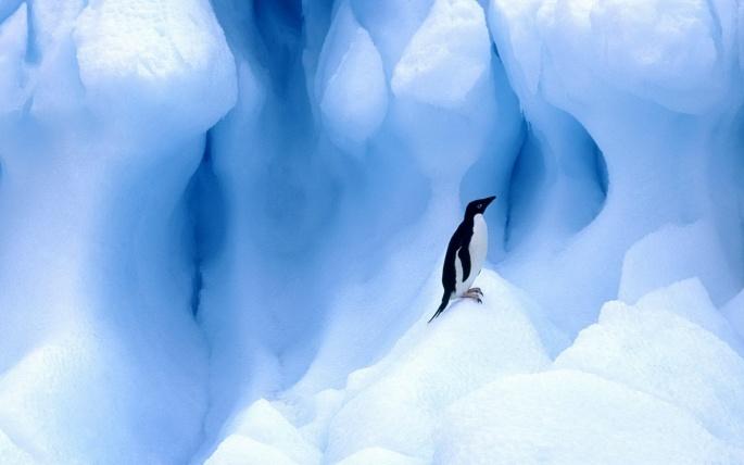 Пингвины (106 обоев)