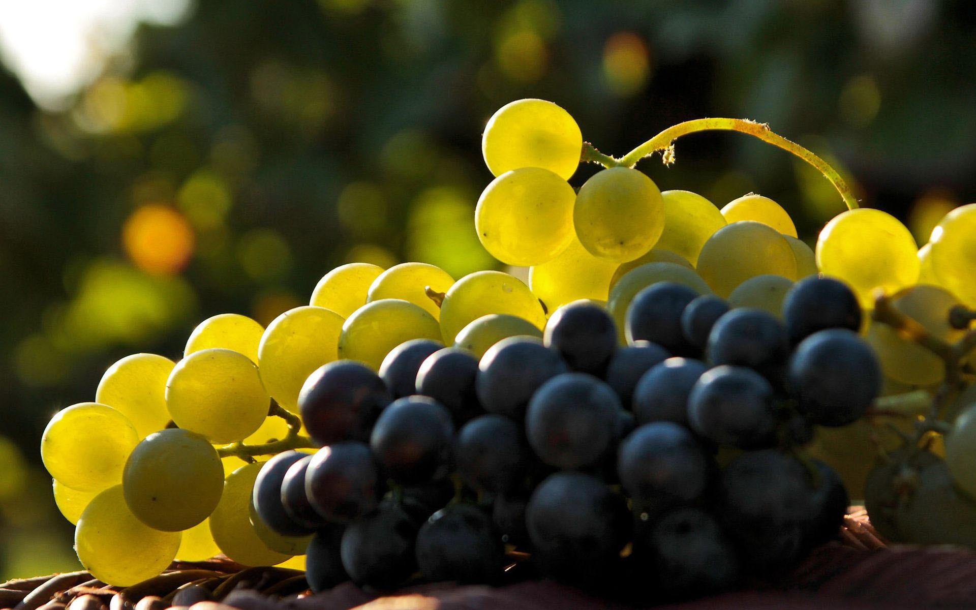 Экспортеры Афганистана продолжают увеличивать поставки винограда на индийский рынок