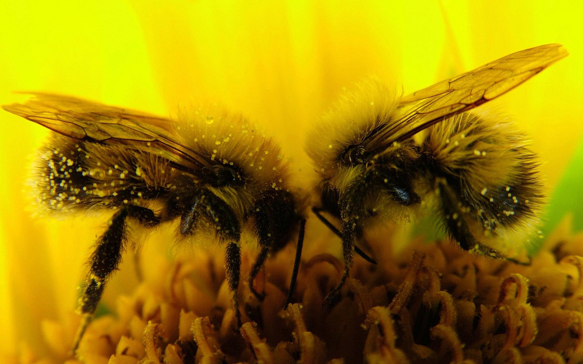 Пчелиный укус в любовном гнездышке 23 фотография