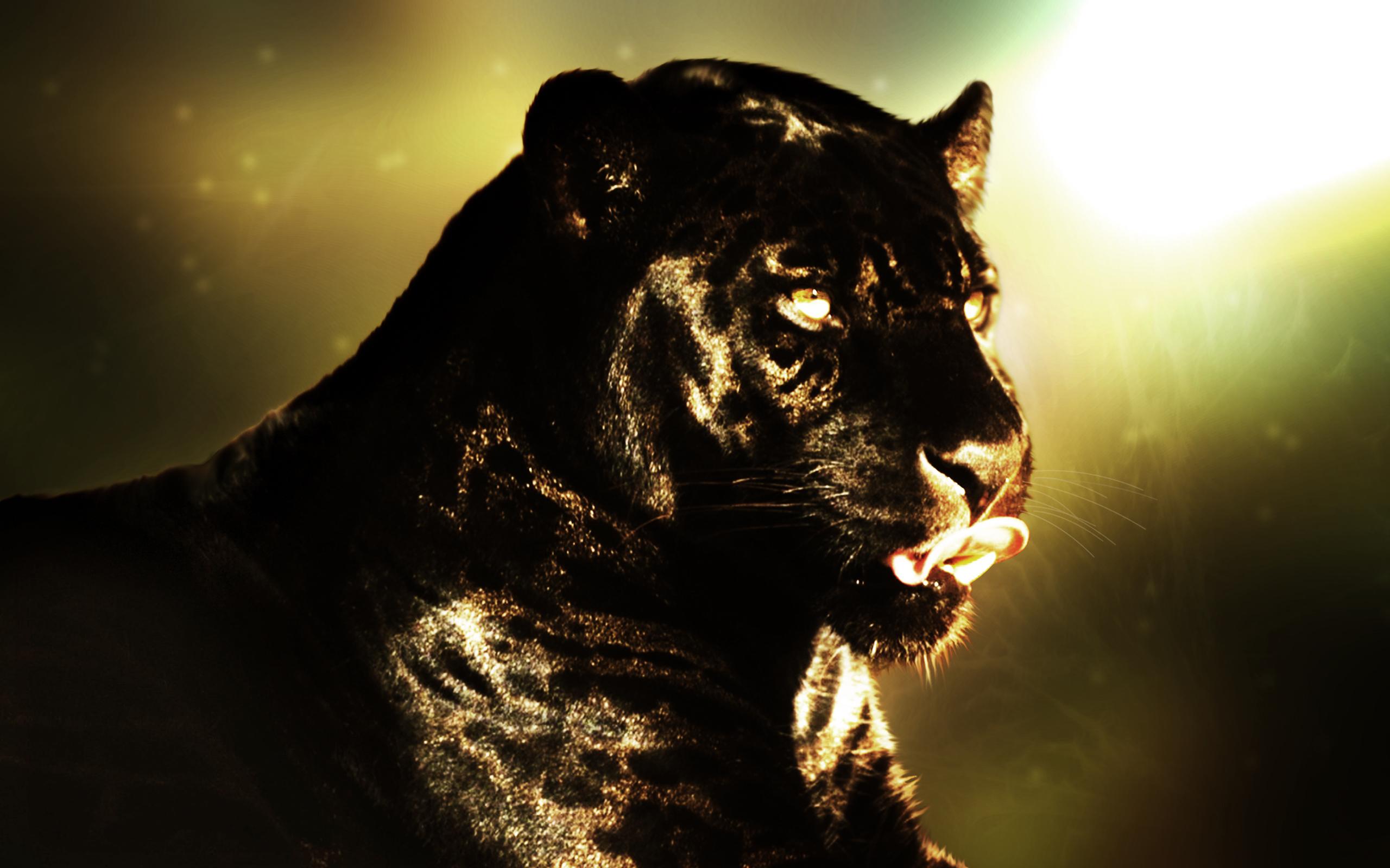 Black jaguar animal wallpaper
