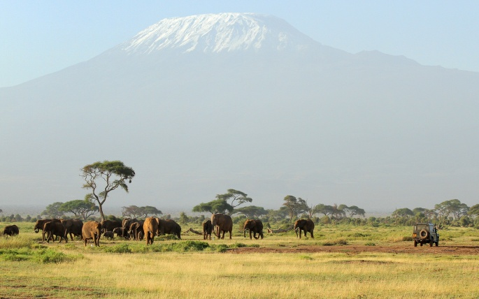 Слоны (60 обоев)