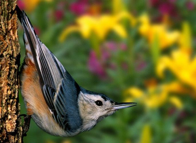 Птицы разные 3 (81 обоев)