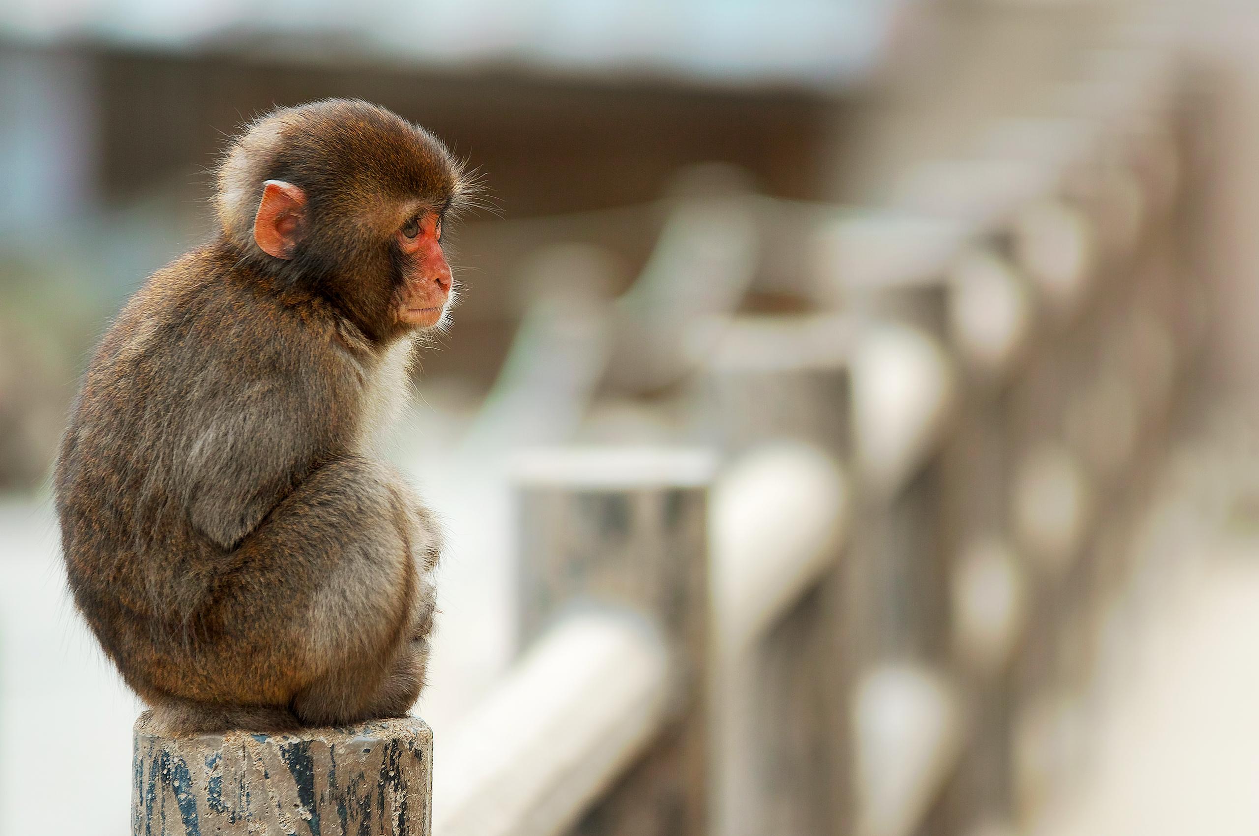 популярных прикольные обезьяны картинки на рабочий стол на весь экран школьных