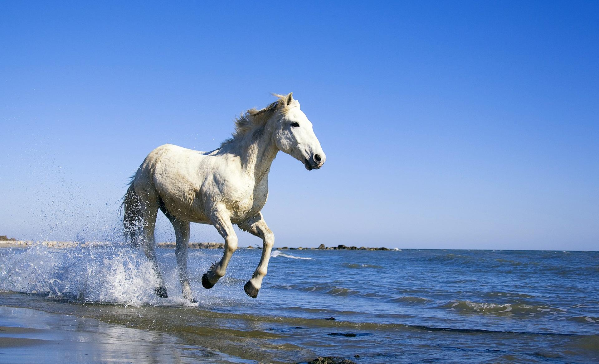 Обои Лошади На Рабочий