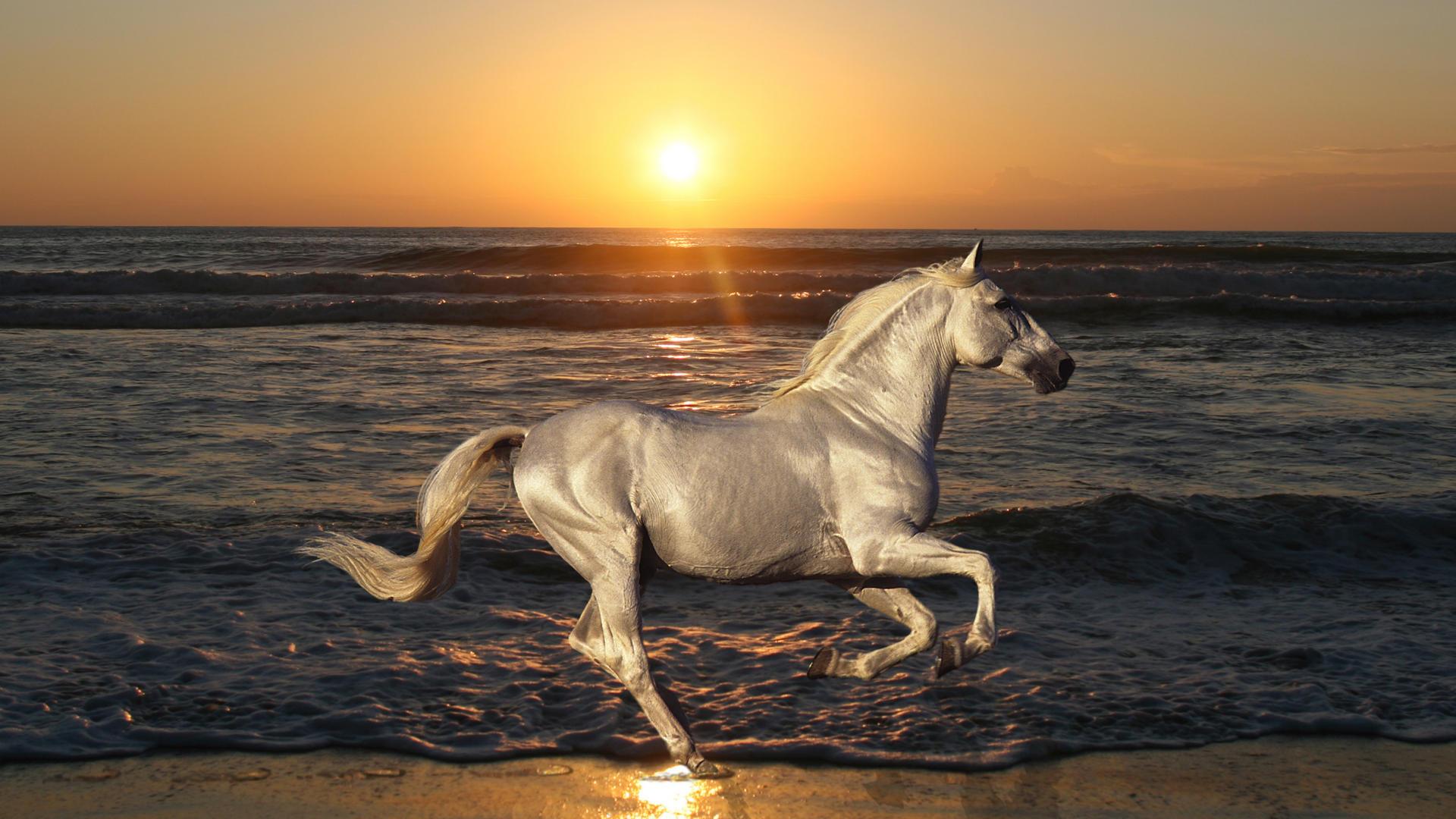 год лошади обои для рабочего стола № 528430 без смс
