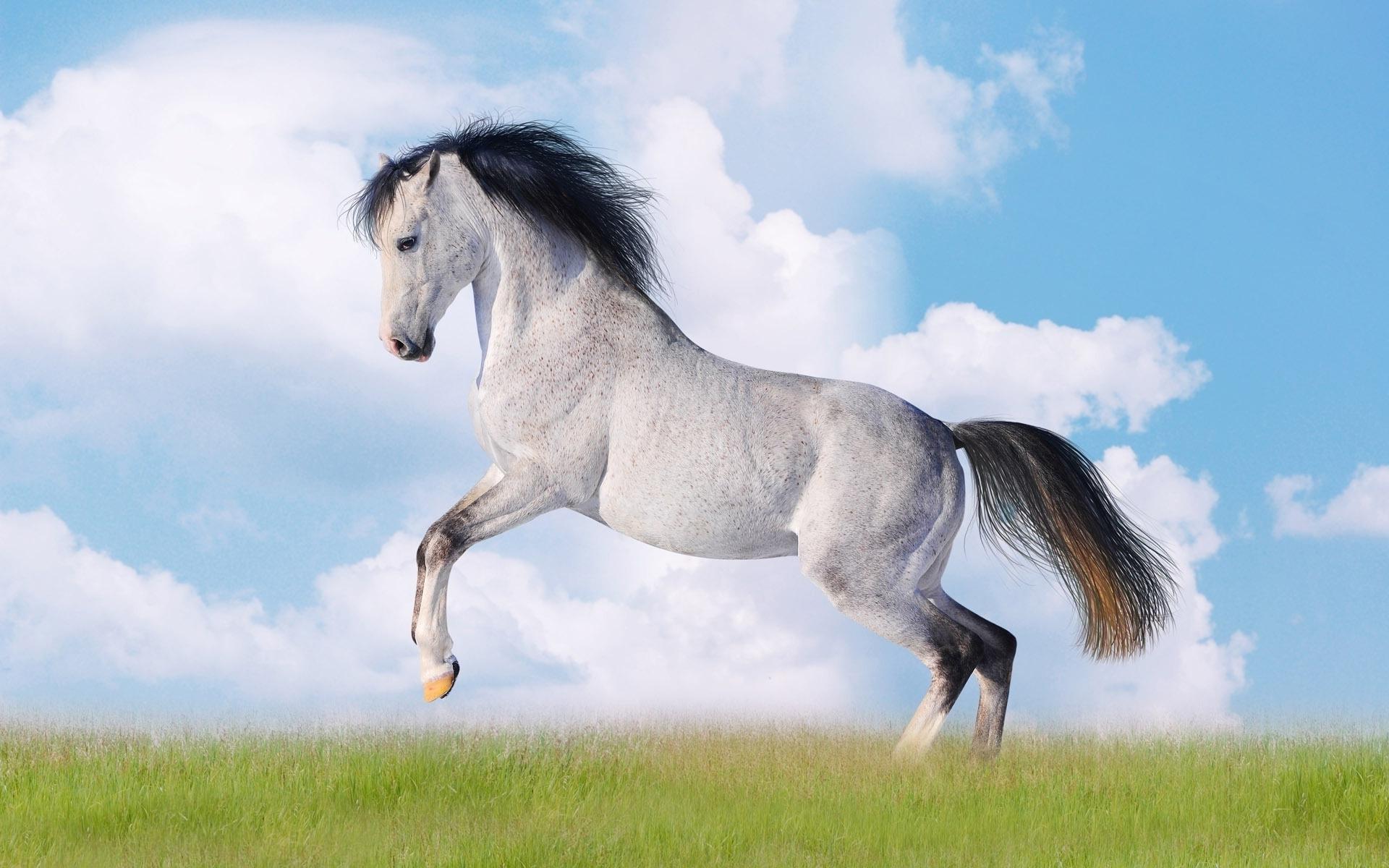 лошади обои на рабочий стол 1280х1024 № 489547  скачать