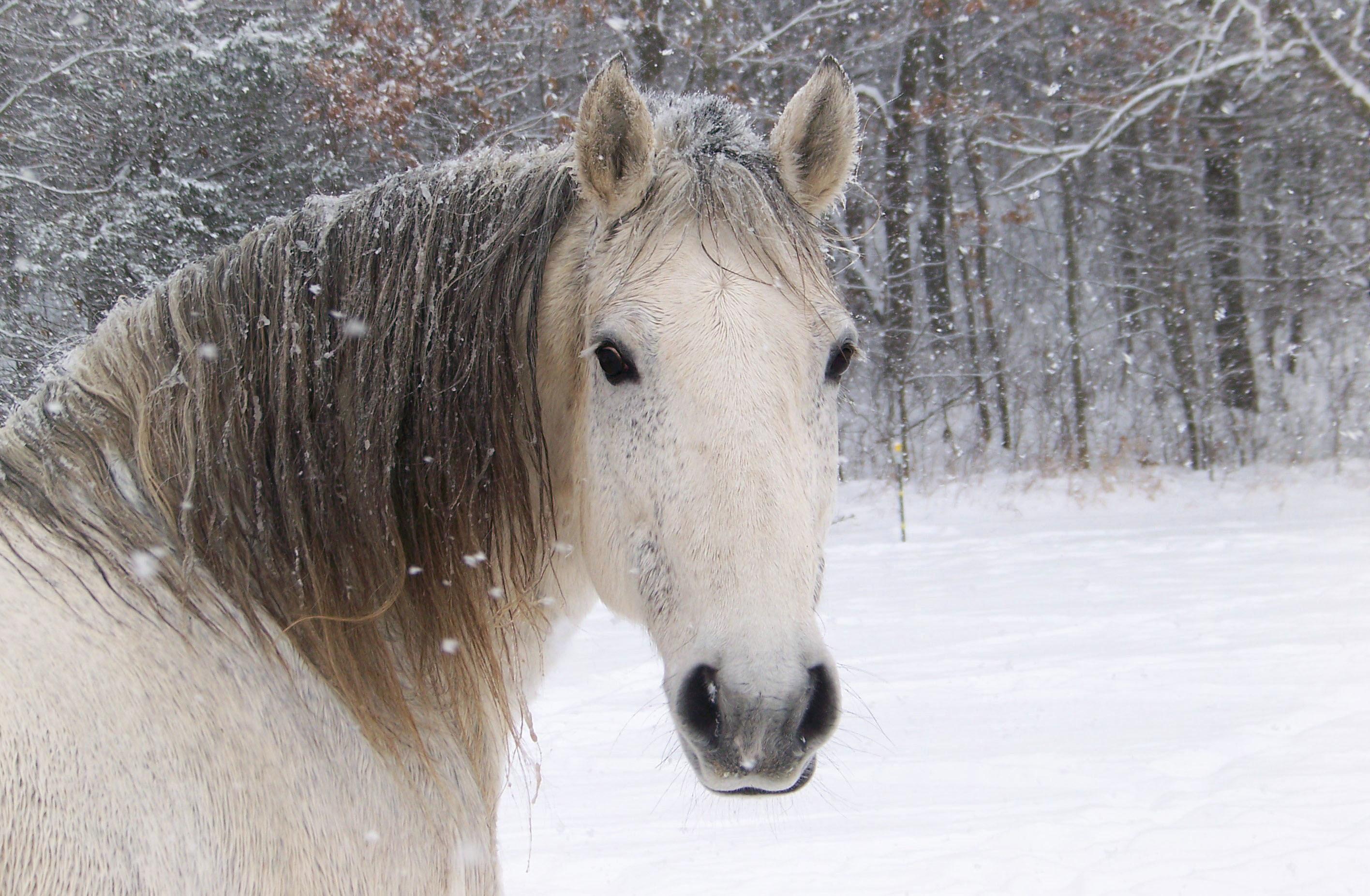 Зимние картинки с лошадьми на рабочий стол