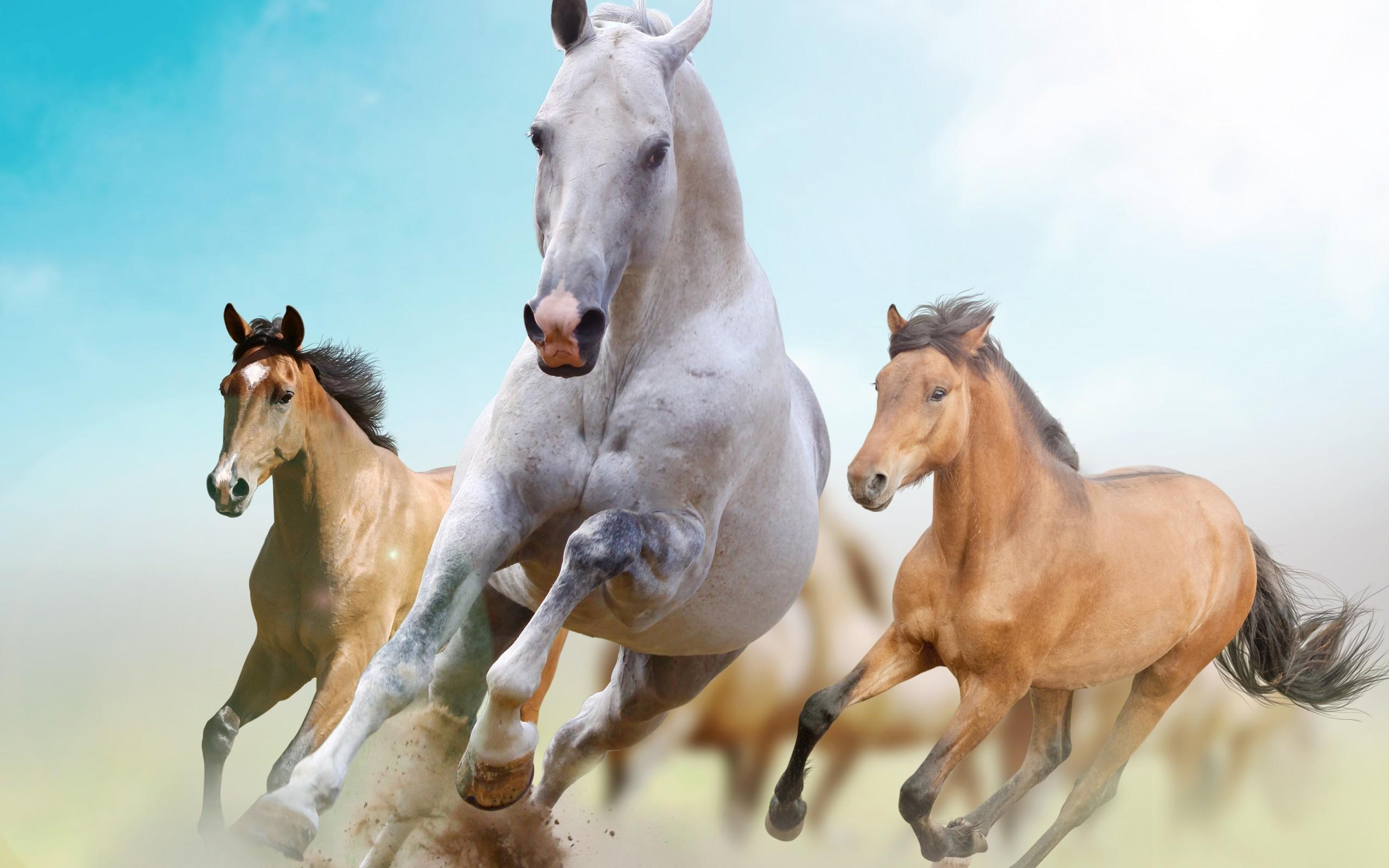 год лошади обои для рабочего стола № 528462 бесплатно