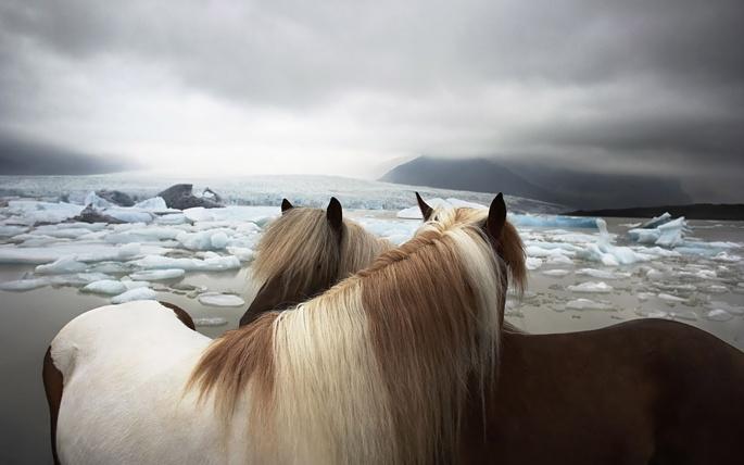 Лошади белые (84 обоев)