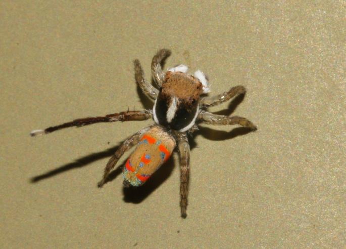 живые обои с человеком пауком на рабочий стол