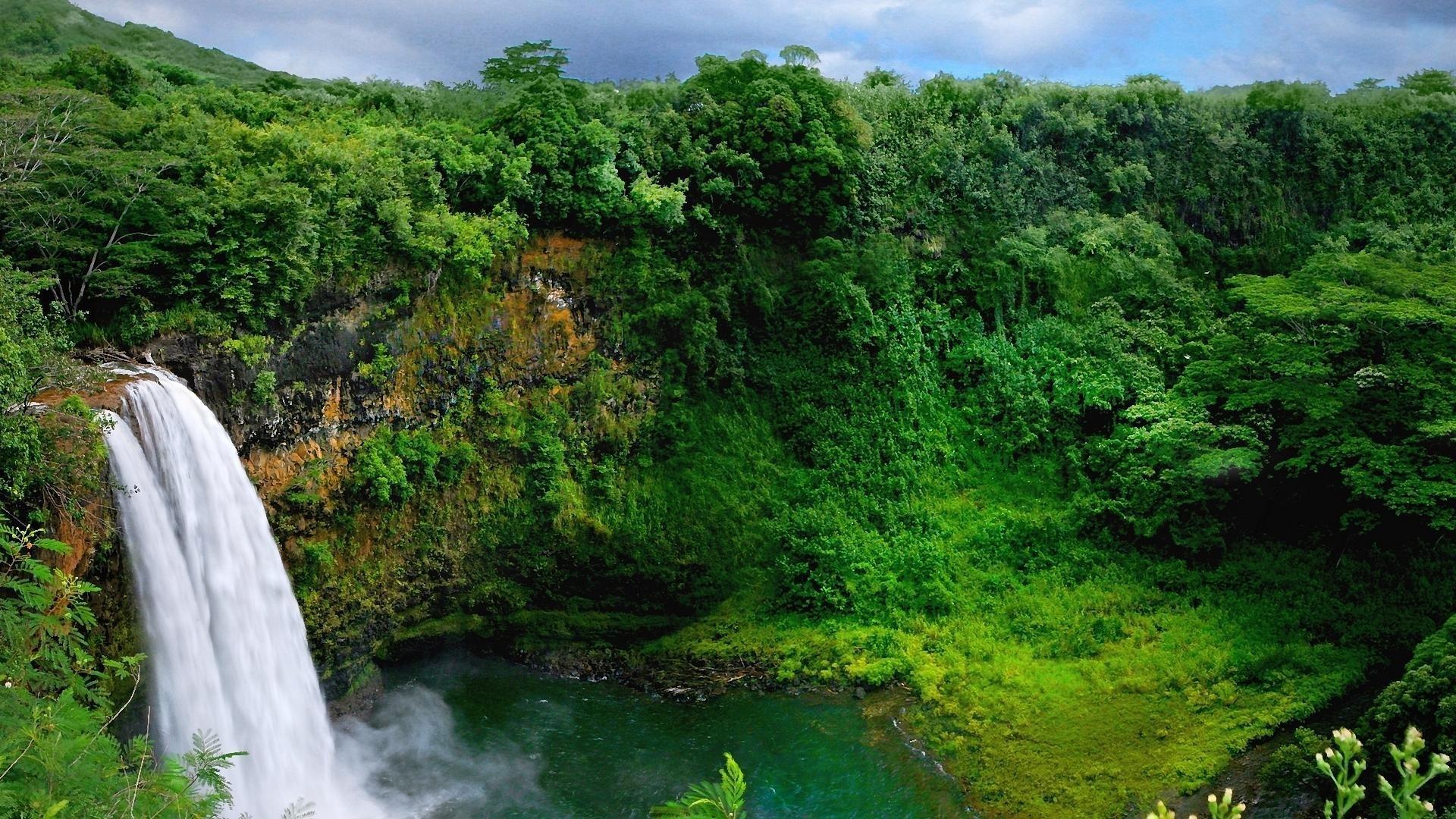 Jungle landscape wallpaper