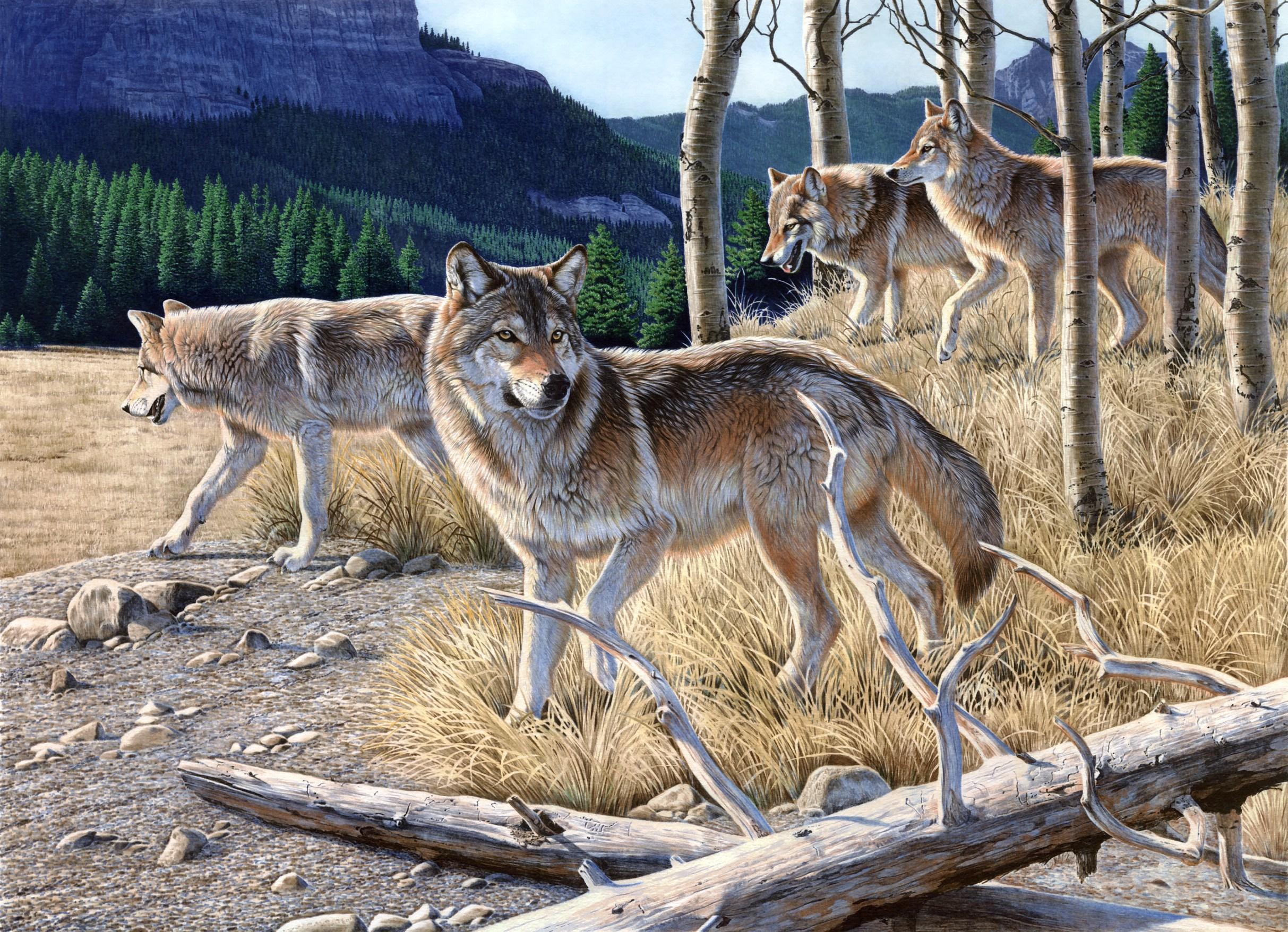Нарисованные волки своими руками фото 812