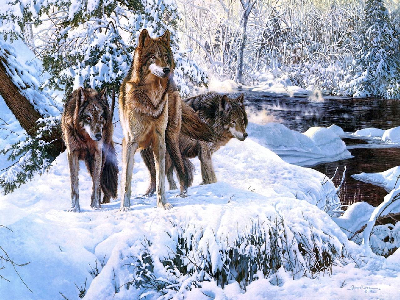 Нарисованные волки своими руками фото 636