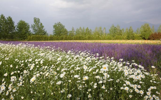 Красивые поля (45 обоев)