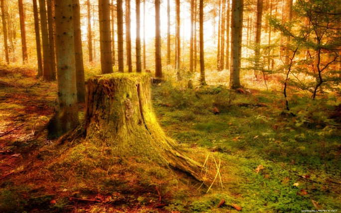 Лес (120 обоев)