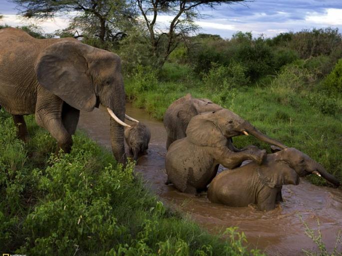 Слон и слоненок (60 обоев)