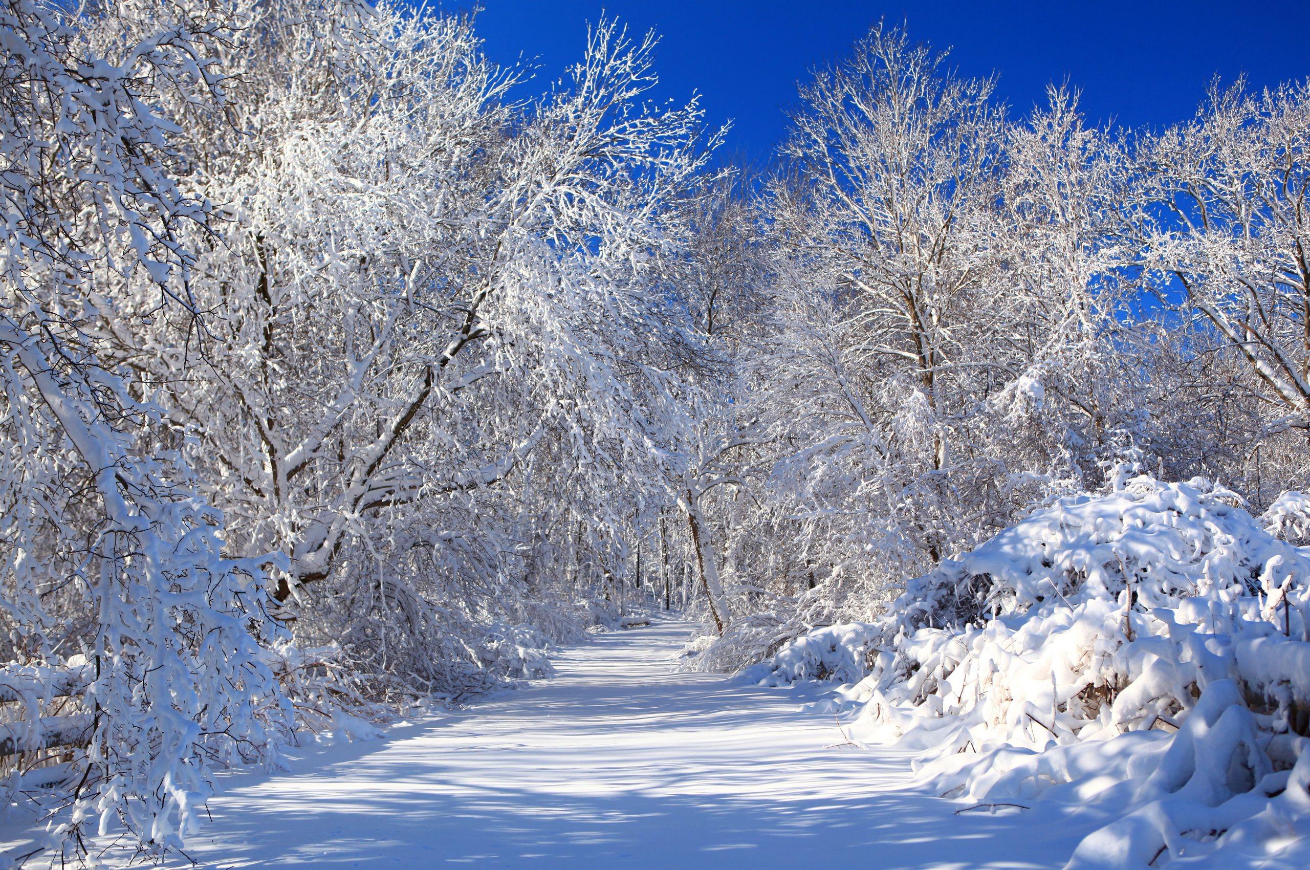 обои зима снежная на рабочий стол № 640801 бесплатно