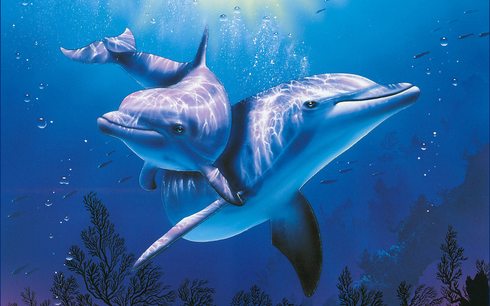 25 удивительных фактов о дельфинах!