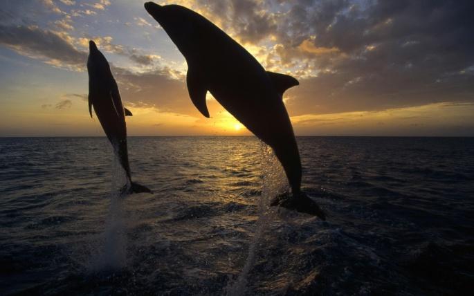Дельфины (56 обоев)