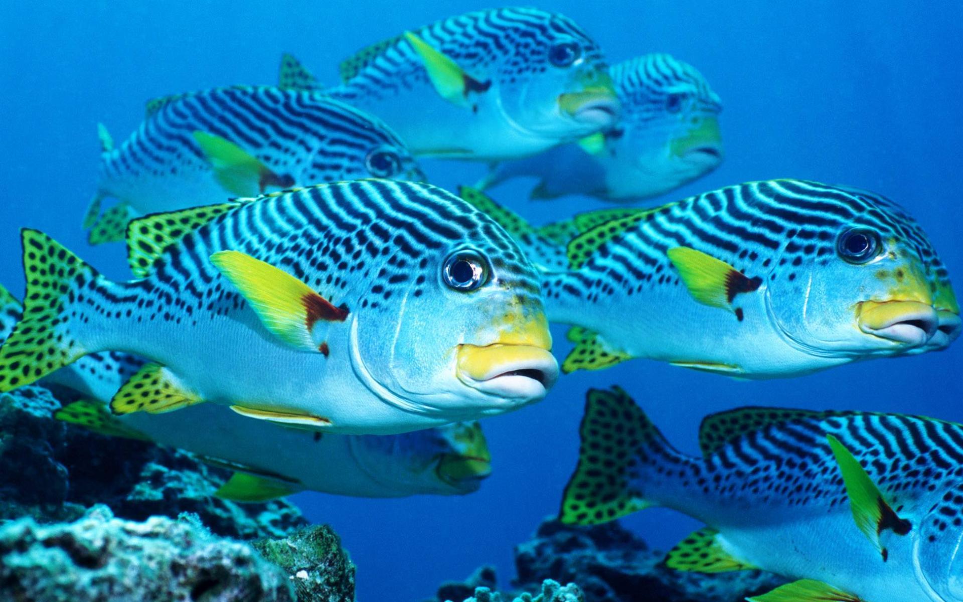 трубки рыбы фото и обои на рабочий популярная невероятно