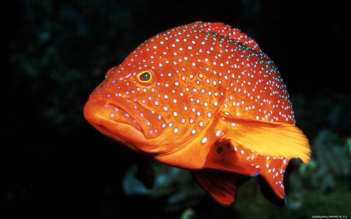 Рыбы 2 (70 обоев)