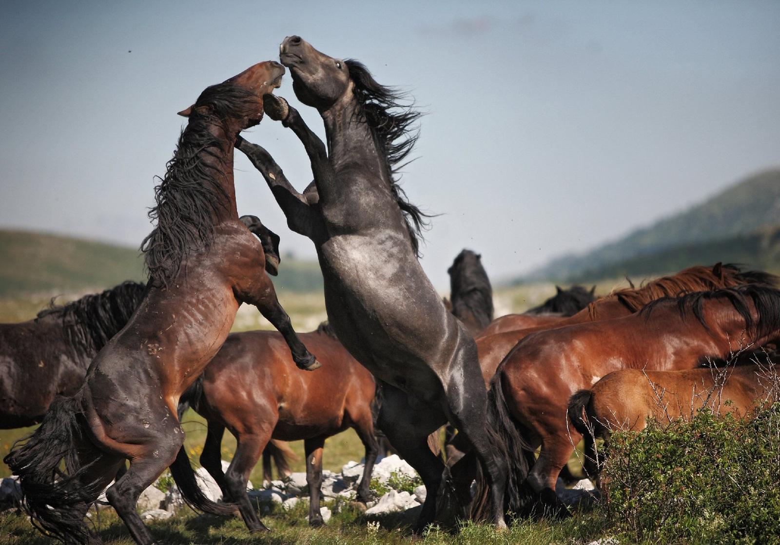 Лошадь - лошадка своими руками. 50 мастер-классов